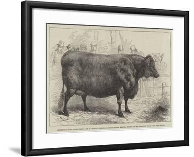 Smithfield Club Cattle Show--Framed Giclee Print