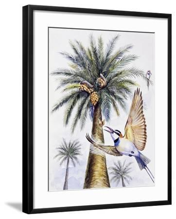 White-Throated Bee-Eater (Merops Albicollis)--Framed Giclee Print