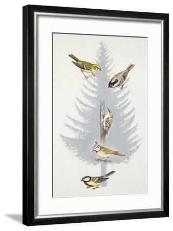 Zoology: Birds--Framed Giclee Print