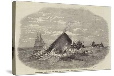 Destruction of the Larboard Boat of the Ann Alexander, by a Sperm Whale, in the South Pacific--Stretched Canvas Print