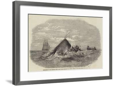 Destruction of the Larboard Boat of the Ann Alexander, by a Sperm Whale, in the South Pacific--Framed Giclee Print