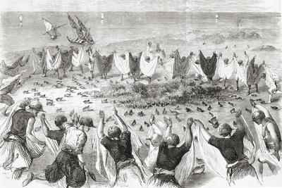 Quail Hunting on the Coast of Syria. from 'L'Univers Illustré', Published 1866--Framed Giclee Print