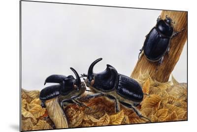 Rhinoceros Beetles (Oryctes Nasicornis), Scarabaeidae, Artwork by Maurice Piedger--Mounted Giclee Print