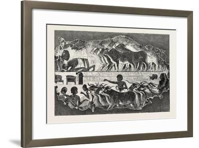 Herd of Cattle Brought before their Owner,From an Egyptian Tomb, Egypt, 1879--Framed Giclee Print