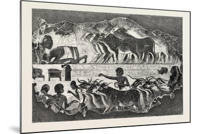 Herd of Cattle Brought before their Owner,From an Egyptian Tomb, Egypt, 1879--Mounted Giclee Print