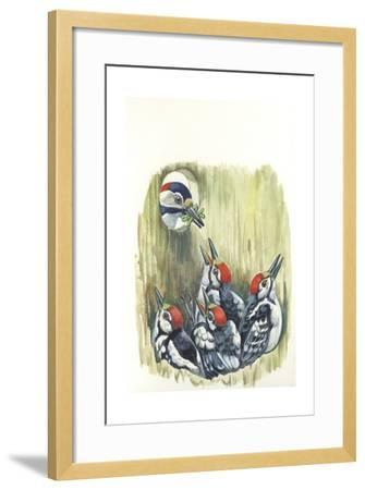 Great Spotted Woodpecker Dendrocopos Major While Carrying Food to Young in Nest--Framed Giclee Print