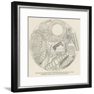 Infusoria Procured by Sir James Ross from the Bottom of the Antarctic Ocean--Framed Giclee Print