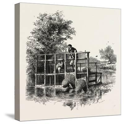 Eel Bucks on the Thames, Scenery of the Thames, UK, 19th Century--Stretched Canvas Print