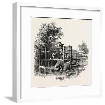 Eel Bucks on the Thames, Scenery of the Thames, UK, 19th Century--Framed Giclee Print