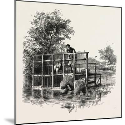 Eel Bucks on the Thames, Scenery of the Thames, UK, 19th Century--Mounted Giclee Print