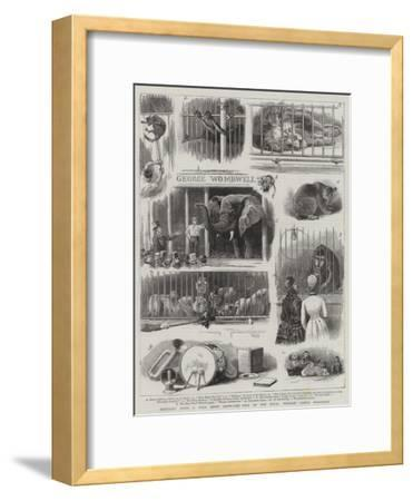 Knocking Down a Wild Beast Show, the Sale of the Royal Windsor Castle Menagerie--Framed Giclee Print