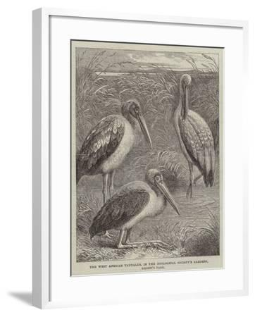 The West African Tantalus, in the Zoological Society's Gardens, Regent's Park--Framed Giclee Print