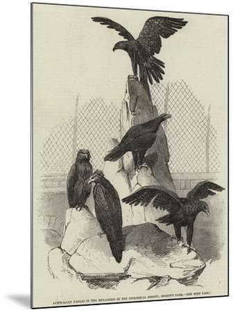 Australian Eagles in the Menagerie of the Zoological Society, Regent's Park--Mounted Giclee Print