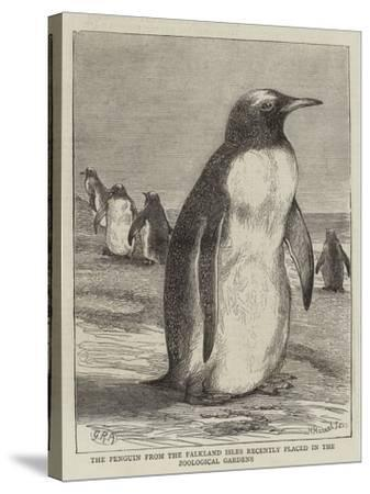 The Penguin from the Falkland Isles Recently Placed in the Zoological Gardens--Stretched Canvas Print