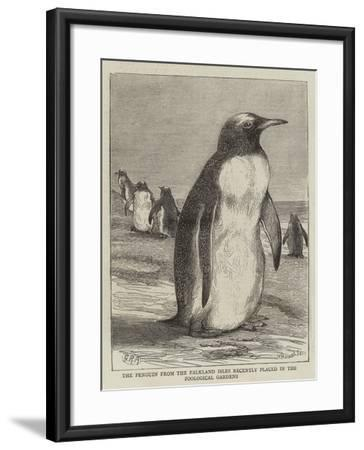 The Penguin from the Falkland Isles Recently Placed in the Zoological Gardens--Framed Giclee Print