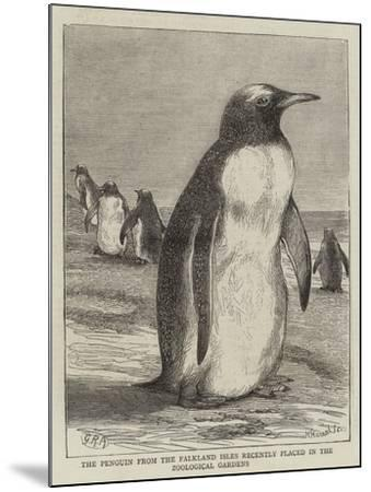 The Penguin from the Falkland Isles Recently Placed in the Zoological Gardens--Mounted Giclee Print