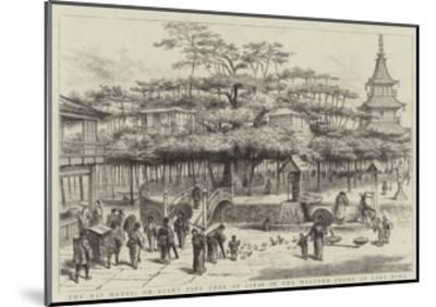 The Dai Matsu, or Giant Pine Tree of Japan on the Western Shore of Lake Biwa--Mounted Giclee Print