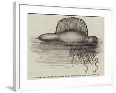 Physalia, or Portuguese Man-Of-War, Lately Found on the South Coast of England--Framed Giclee Print
