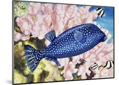 Spotted Boxfish or Spotted Trunkfish (Ostracion Lentiginosus or Ostracion Meleagris), Ostraciidae--Mounted Giclee Print