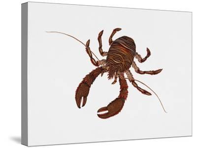 Black Squat Lobster (Galathea Squamifera), Galatheidae, Artwork by Rebecca Hardy--Stretched Canvas Print