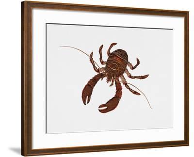 Black Squat Lobster (Galathea Squamifera), Galatheidae, Artwork by Rebecca Hardy--Framed Giclee Print