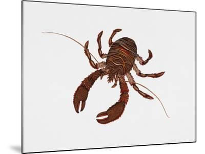 Black Squat Lobster (Galathea Squamifera), Galatheidae, Artwork by Rebecca Hardy--Mounted Giclee Print