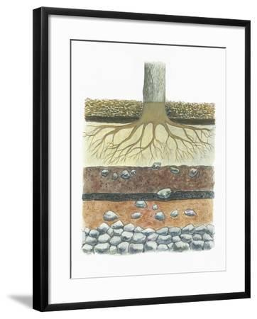 Botany, Tree Roots in Podzol Soil, Typical of Conifer Forests, Cross Section--Framed Giclee Print