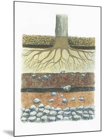 Botany, Tree Roots in Podzol Soil, Typical of Conifer Forests, Cross Section--Mounted Giclee Print