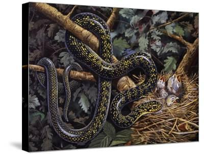 Green Whip Snake or Western Whip Snake (Hierophis Viridiflavus), Colubridae--Stretched Canvas Print