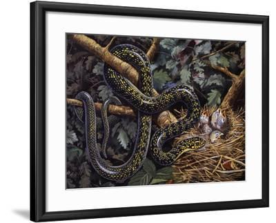 Green Whip Snake or Western Whip Snake (Hierophis Viridiflavus), Colubridae--Framed Giclee Print