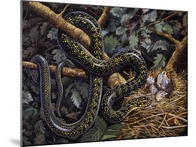 Green Whip Snake or Western Whip Snake (Hierophis Viridiflavus), Colubridae--Mounted Giclee Print