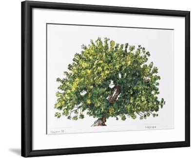 Botany, Trees, Fabaceae, Carob Tree or St John's Bread Ceratonia Siliqua--Framed Giclee Print