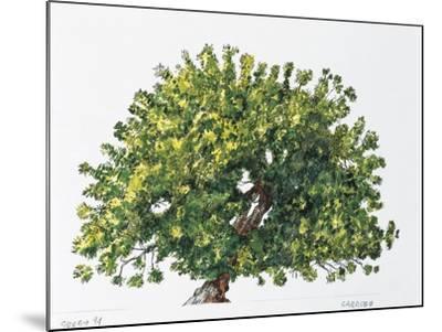 Botany, Trees, Fabaceae, Carob Tree or St John's Bread Ceratonia Siliqua--Mounted Giclee Print