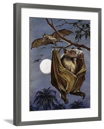 Hammer-Headed Bat or Big-Lipped Bat (Hypsignathus Monstrosus), Pteropodidae--Framed Giclee Print