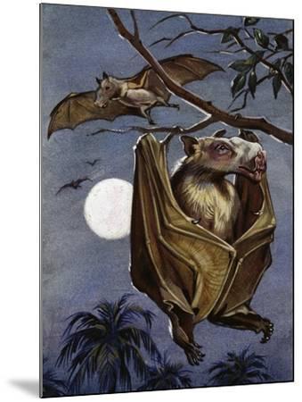 Hammer-Headed Bat or Big-Lipped Bat (Hypsignathus Monstrosus), Pteropodidae--Mounted Giclee Print