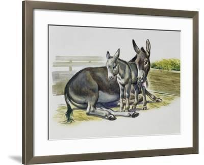 Foal and Jenny of African Wild Ass or African Wild Donkey (Equus Africanus), Equidae--Framed Giclee Print
