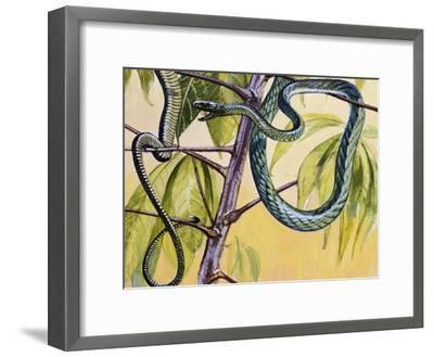 Western Green Mamba or Hallowell's Green Mamba (Dendroaspis Viridis), Elapidae--Framed Giclee Print