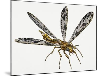 Giant Ant Lion (Palpares Libelluloides), Myrmeleonidae. Artwork by Neil Lloyd--Mounted Giclee Print
