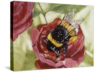 Buff-Tailed Bumblebee or Large Earth Bumblebee (Bombus Terrestris), Apidae--Stretched Canvas Print