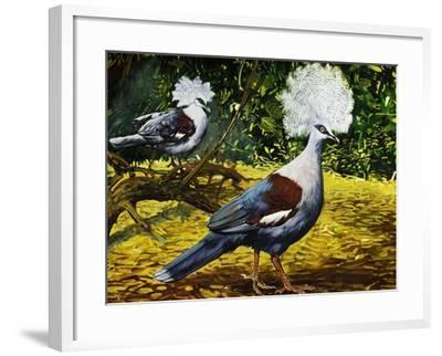 Western Crowned Pigeon or Blue Crowned Pigeon (Goura Cristata), Columbidae--Framed Giclee Print