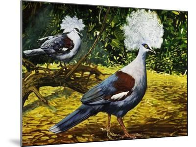 Western Crowned Pigeon or Blue Crowned Pigeon (Goura Cristata), Columbidae--Mounted Giclee Print