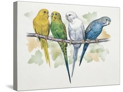 Close-Up of Four Parrots Perching on a Branch (Melopsittacus Undulatus)--Stretched Canvas Print