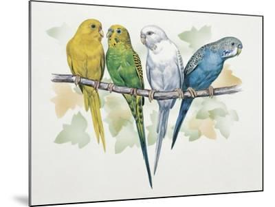 Close-Up of Four Parrots Perching on a Branch (Melopsittacus Undulatus)--Mounted Giclee Print