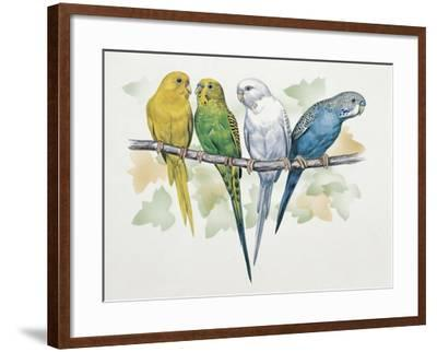 Close-Up of Four Parrots Perching on a Branch (Melopsittacus Undulatus)--Framed Giclee Print