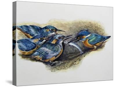 Female Common Kingfisher Feeding Her Young (Alcedo Atthis), Alcedinidae--Stretched Canvas Print