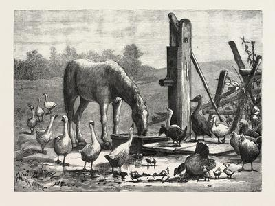 A Fashionable Watering Place. Horse, Geese, Chicken, Outdoor, Farm, 1876--Framed Giclee Print