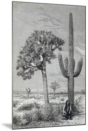 Arizona Desert Landscape with Cactus and Yucca Plants, USA, 19th Century--Mounted Giclee Print