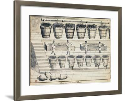 Processing Cycle for Extracting Sugar from Beet, Watercolor, Portugal, 19th Century--Framed Giclee Print