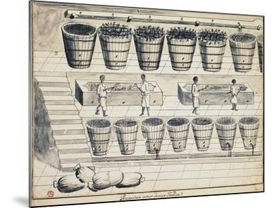 Processing Cycle for Extracting Sugar from Beet, Watercolor, Portugal, 19th Century--Mounted Giclee Print