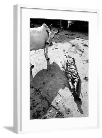 Prostrate Man Praying and Cow, Jagannath Temple, Puri, Orissa, India, 1977--Framed Photographic Print